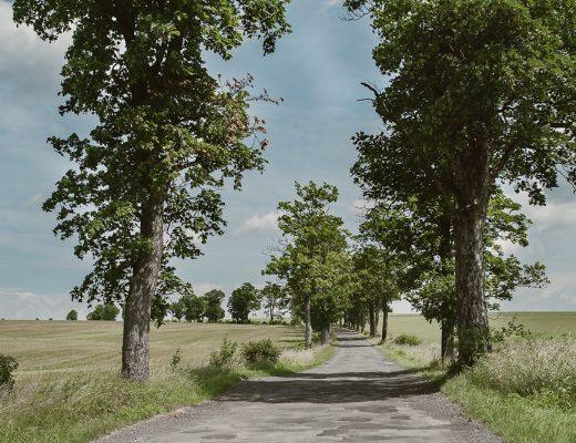 droga między drzewami w nieznane, jak przenieść wesele